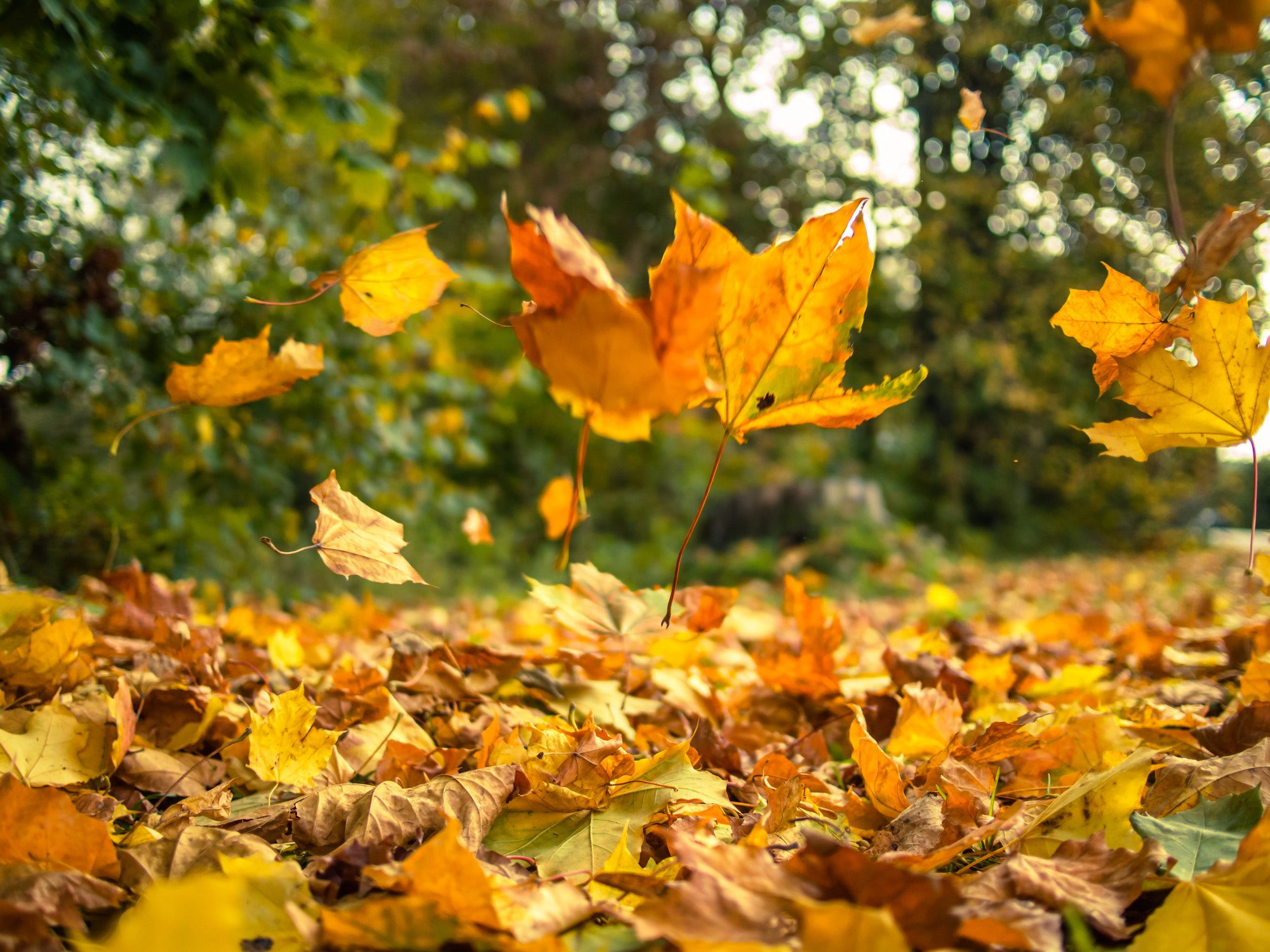 Chinese medicine and how to live in harmony with the fall season